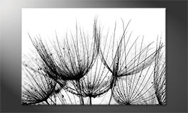 Decoración moderna<br>'Detail Of Dandelion'