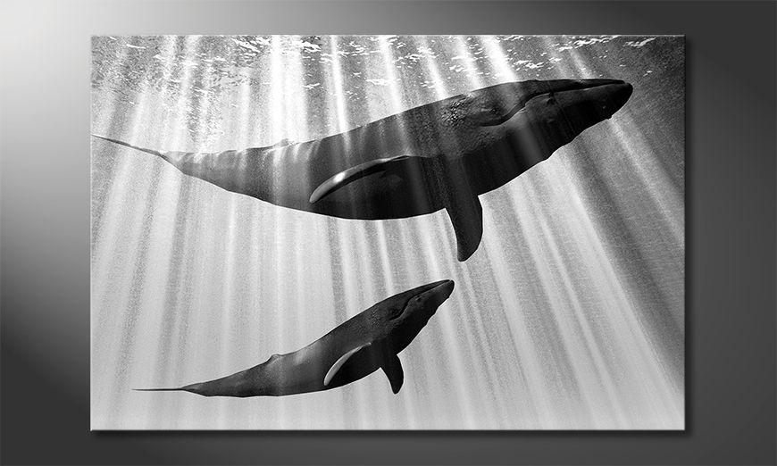 Decoración moderna Whales