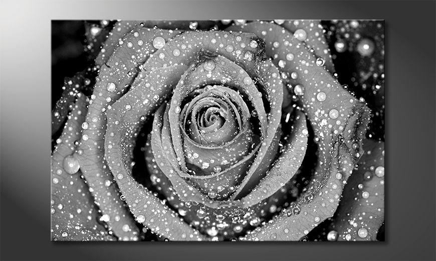 El cuadro Morning Rose