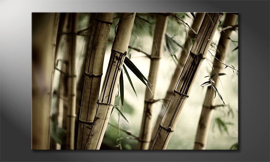 El cuadro moderno Bamboo Forest