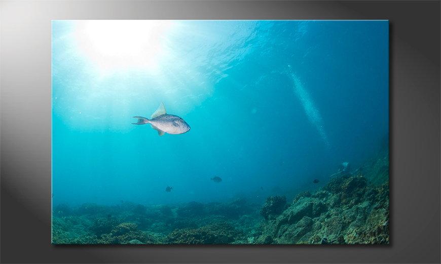 El cuadro moderno Colorful Reef