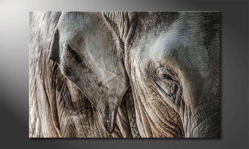 El cuadro moderno Eye of Elephant