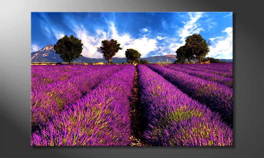 El cuadro moderno Lavender