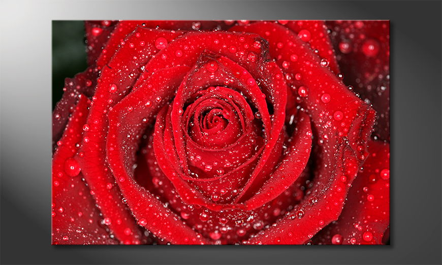 El cuadro moderno Morning Rose