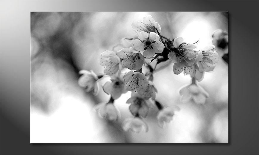 La cuadro impresa Cherry Blossoms